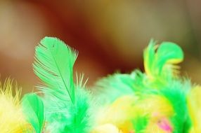 green and yellow feathers