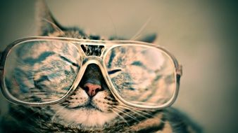 cute Cat in big Glasses portrait