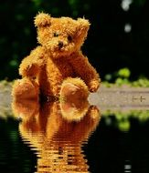 teddy bear on the puddle