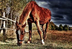 brown horse on a farm as picture