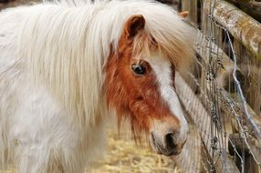 pony with white mane in Wildpark Poing