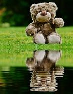 soft teddy by the puddle