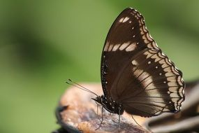 closeup of a brown butterfly in wildlife