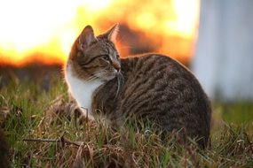 sitting domestic cat in evening lights