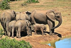 herd of elephants near the water in south africa