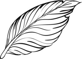 feather, black and white drawing