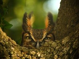 great horned owl in wildlife