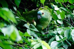 Green parrot on a tree