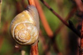 Shell Snail on branch