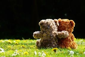 teddy bears in love on green grass