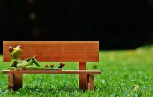 green frog rests on a wooden bench