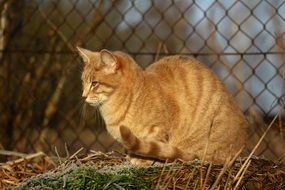 red cat on the background of a wire fence