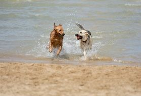 red dog and a white dog on the beach