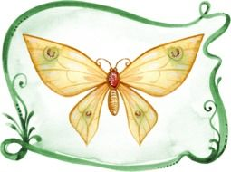 Butterfly Watercolor drawing