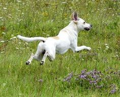 playful dog in a summer meadow