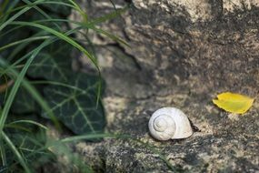 white Snail Shell on grey stone