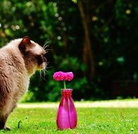 Flower Decoration and cat