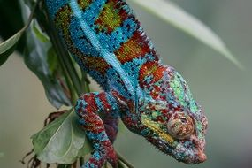 Chameleon sitting on a green branch