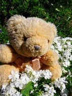 teddy bear in white flowers
