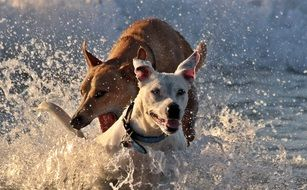 Dogs playing in a water