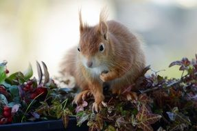 red squirrel on the autumn leaves on the balcony