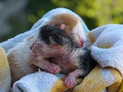 two newborn kittens