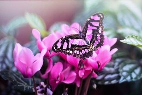 charming Pink Butterfly