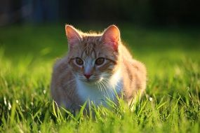 young cat on the green grass