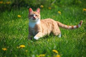 playful young cat on the grass