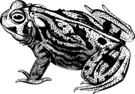 Frog Toad drawing