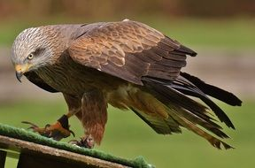 bird of prey in the wildpark poing