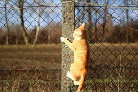 photo of climbing on fence young cat