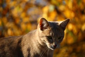 young cat in the middle of autumn