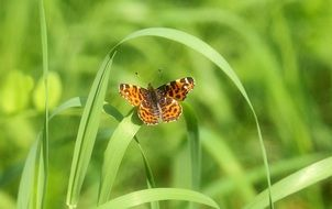brown butterfly on green grass stems