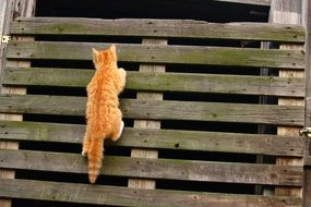 young cat climbing on wooden wall