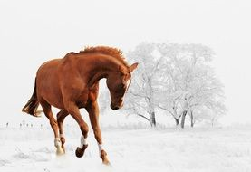 Horse Playing in Snow landscape