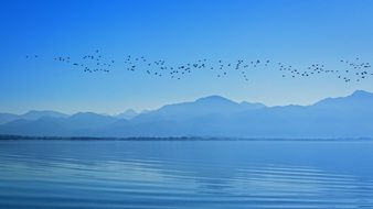 Flock of birds flying over the chiemsee