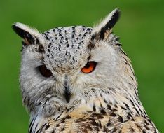 eagle owl in wildpark poing