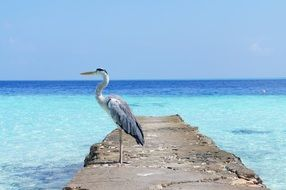 Heron by the Sea