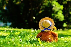 teddy bear in hat sits on green grass