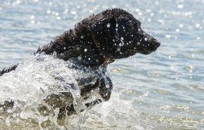 dog running on the water