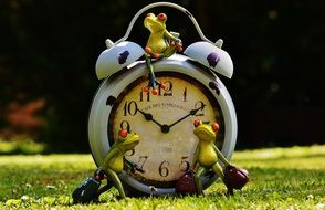 frog near the clock on the green grass