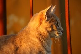 cute young cat in evening lights