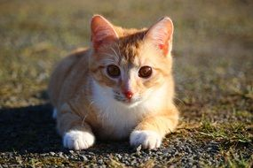 cute young cat lying on ground