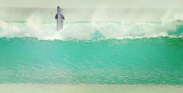 dolphin jumping in waves