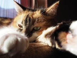 red domestic cat resting in the sun