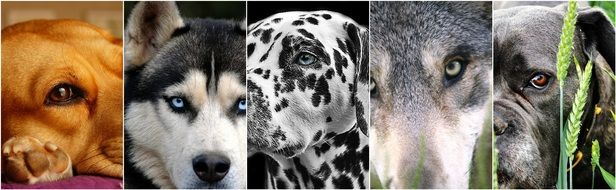 collage of dogs\' portraits