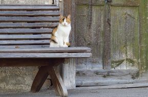 spotted cat on a bench