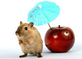 hamster and Apple with umbrella