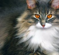 magnificent cat with bright expressive eyes